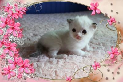 IMG_0878 lynx boy cocoa_flower-18
