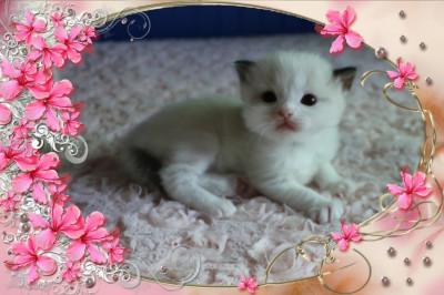 IMG_0899 boy cocoa_flower-18