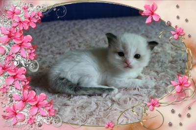 IMG_0937 girl cocoa_flower-18