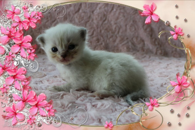 IMG_2303 blue lynx mitted tl_flower-18
