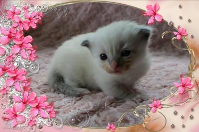 IMG_2381 tl girl_flower-18