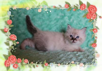 IMG_7379 deb kitten_flower-5