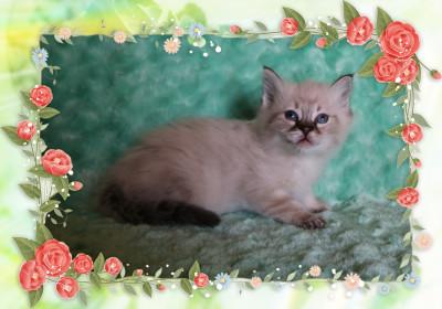 IMG_7403 deb male kitten_flower-5