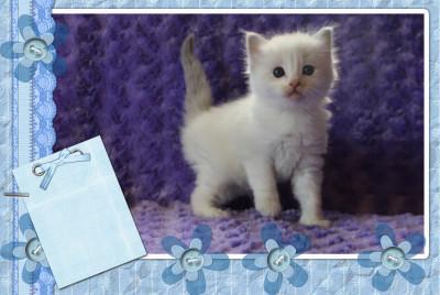IMG_7910 blue lynx bi boy jill_scrapbook-37
