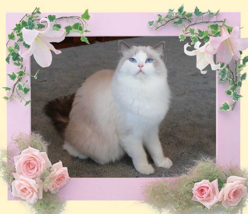 IMG_8035 rosalina_flower-26