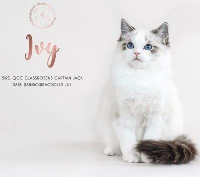 Jills girl 2