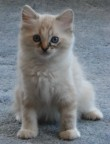 Kim kitten March 16