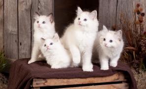 kittens(1)